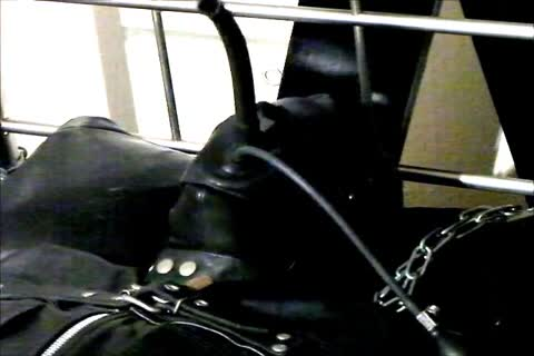 Wearing A Rubber Cat Suit Inside A Leather Body Bag chained To The daybed, Hooded And Gagged, Then Teased For Two Hours Until that guy sperm.