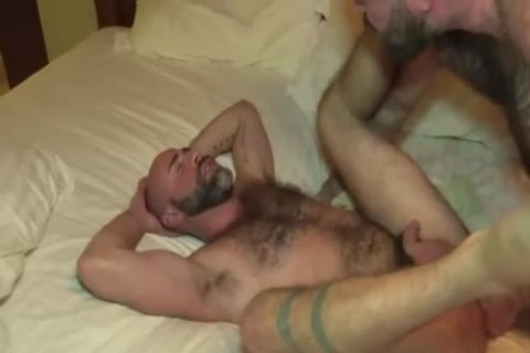 The Bear Likes The gigantic weenie Of The Bear Daddy